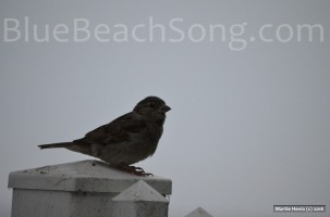 Bird in Half Moon Bay 2016 Summer 1wm
