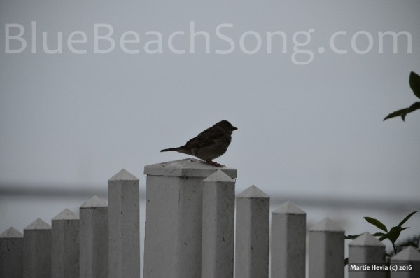 Bird in Half Moon Bay 2016 Summer 2wm