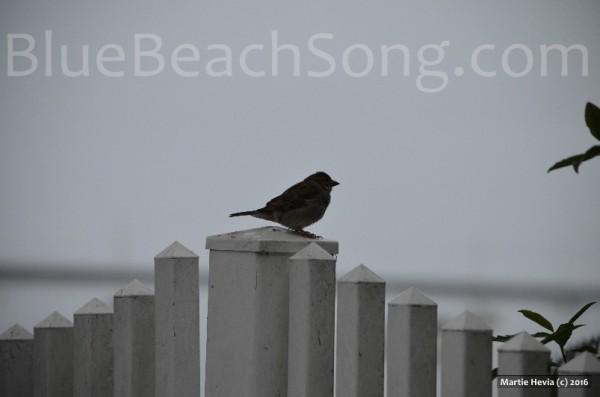 Bird in Half Moon Bay 2016 Summer 2wm