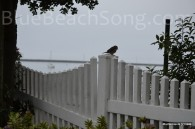 Bird in Half Moon Bay 2016 Summer 3wm