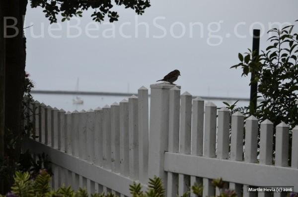 Bird in Half Moon Bay 2016 Summer 3wm